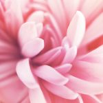 LayerOfLuxury–Flower 2 low res